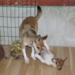 Qila 8½ uge gammel