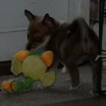 Saga har gang i legetøjet