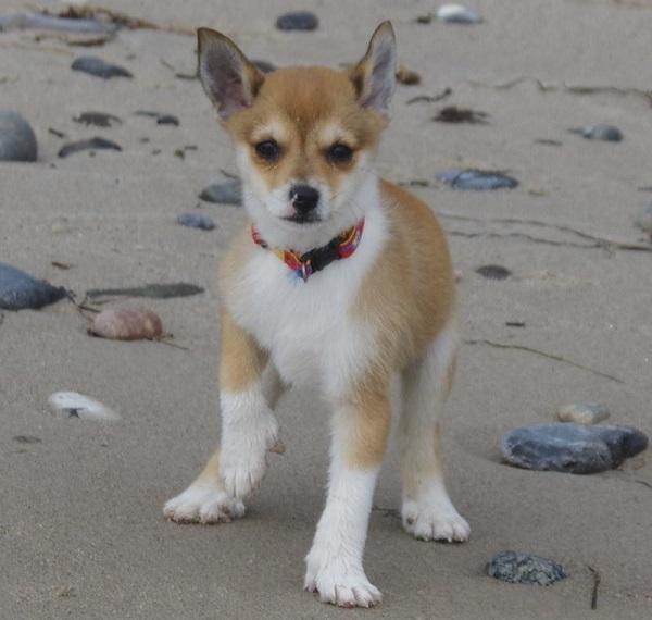 Saija været på stranden for første gang