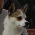 Keeza's Lunde Siri ♀ – bor i Danmark