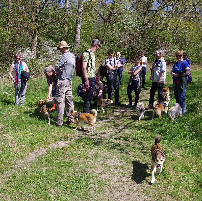 Alle de mange lundehunde blev beundret af mange gæster i skoven