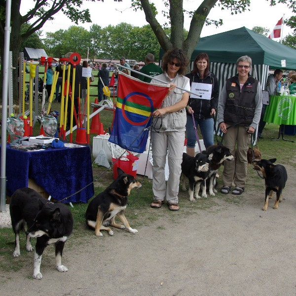 Raceparade med finsk hyrdehund