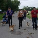 Det var disse lundehunde der gjorde reklame for racen om søndagen
