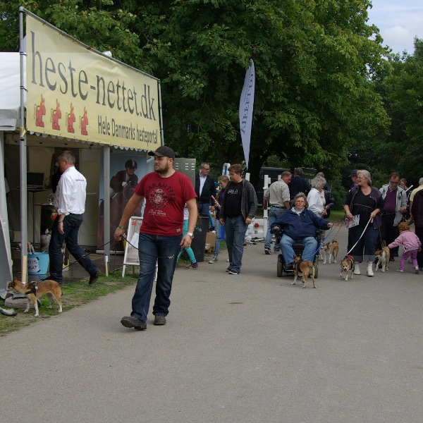 Raceparade med norsk lundehund