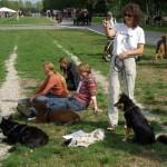 Søndagsgruppen af finsk hyrdehund
