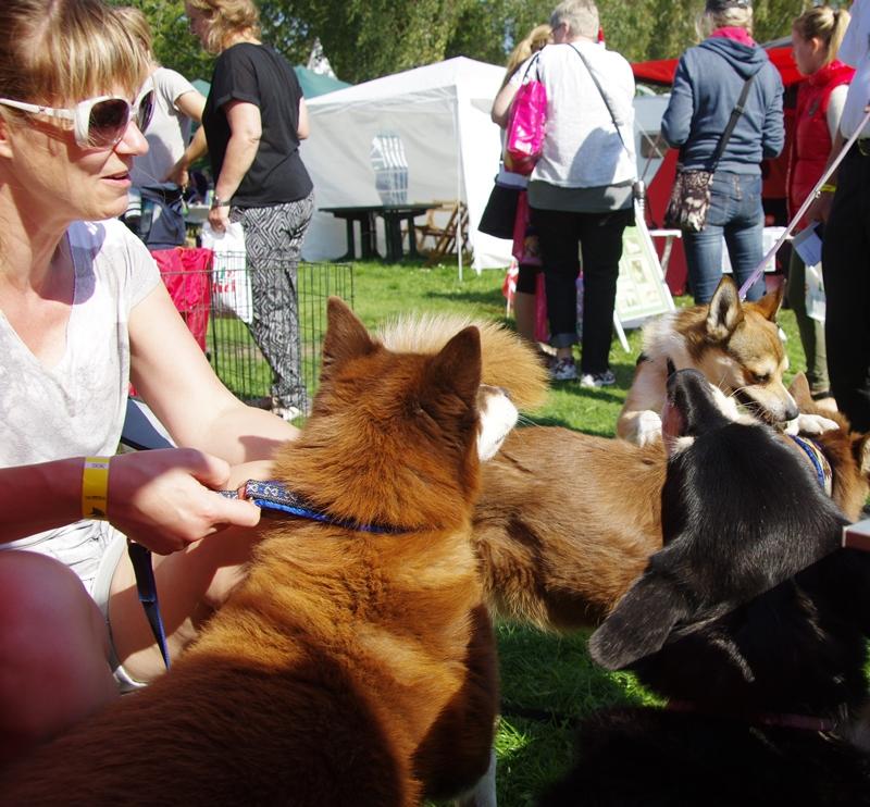 Og hundene nyder hinandens selskab