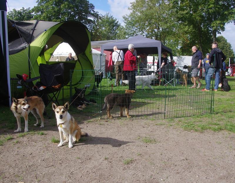 Tokke, Saija, Lievä og Henki var til Store Hestedag i Roskilde