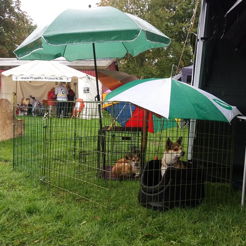 Store Hestedag søndag med regn, regn og regn. Et utal af paraplyer og parasoller blev brugt til at holde hundene i bare lidt tørvejr