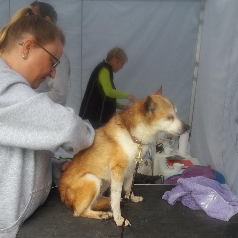 Keeza besøgte hundemassøren og var næsten ved at falde i søvn under behandlingen