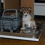 Tokke hjælper med at tømme opvaskemaskinen