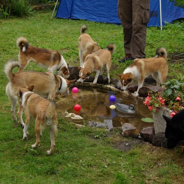 Så er der også bolde i dammen - god aktivitet for hundene.
