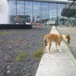 Luftetur i lufthavnen