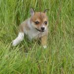 Hvis jeg gemmer mig bag de her græsstrå, kan du nok ikke se mig