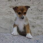 Víla har haft næsen i sandet :-)