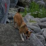En lundehund i sit rette element