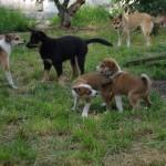 Niisa, Laulu, Oona, Piiri og Paju