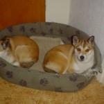 Keeza og Ylva maj 2006