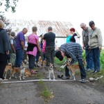 Så er hunde og ejere parate til det traditionelle lundehunderæs