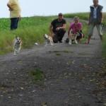 Så går det i fuld fart for nogle hunde og andre véd ikke lige hvad det er de har gang i!
