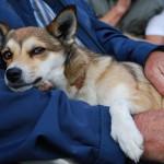 Endnu en hund der er træt i øjnene (Caylas søster Frigg)