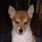 Lofar 9 uger gammel
