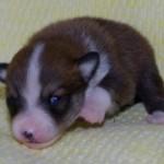 Ouna 2 uger gammel