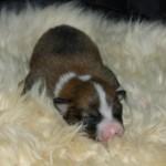 Owena 1 uge gammel
