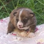 Owena 3 uger gammel