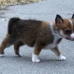 Owena 5 uger gammel