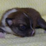 Oona 2 uger gammel