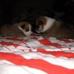 Lauga og Lofar 3 uger gamle