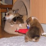 Lofar og Lauga 4 uger gamle