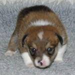 Qilq 3 uger gammel