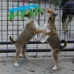 Sara og Saga leger bide-til-bolle