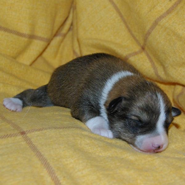 Dreng 1 - 1 uge gammel