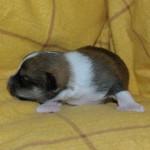 Dreng 2 - 1 uge gammel