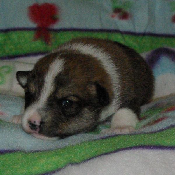 Dreng 2 - 2 uger gammel