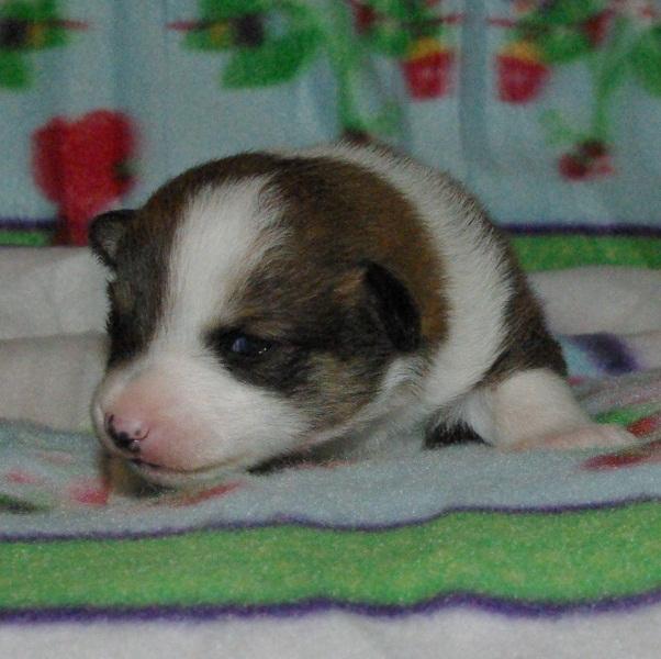 Dreng 3 - 2 uger gammel