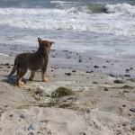 Henki er lidt fascineret af bølgerne