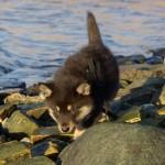 Keeza's Lunde Vesi  Kallavedessä (Kalla)