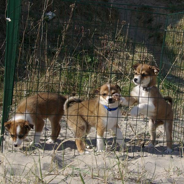 Rupis, Roki og Roar ved stranden
