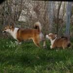 Niisa og Rupis
