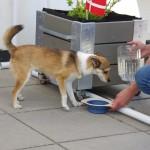 Saija får serveret vand, hvilket var hårdt tiltrængt i varmen