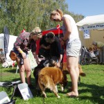 Hundene studeres af de besøgende