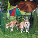 Søndag var det Keeza og Oona der repræsenterede mine lundehunde