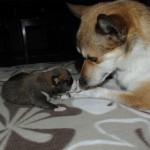 Niisa er en kærlig og opmærksom mor