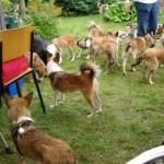 Hundene er hurtige til at samle sig når der uddeles godbidder!