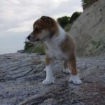 Víla 8 uger på strandtur ved Møns klint