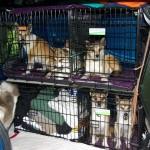 Mikrocamperen pakket og hundene sidder parat til nye eventyr