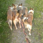 Keeza, Gaia, Niisa, Cayla og Oona på gåtur